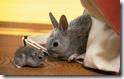rabbit 14 desktop widescreen wallpaper