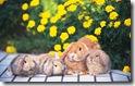 rabbit 15 desktop widescreen wallpaper