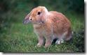 rabbit 21 desktop widescreen wallpaper