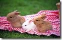 rabbit 26 desktop widescreen wallpaper