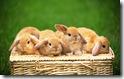 rabbit 37 desktop widescreen wallpaper