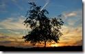 Landscape(2) 24 Desktop widescreen wallpaper