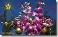 christmas orchids widescreen wallpaper 1920 x 1200 desktop widescreen wallpaper