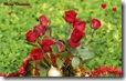 christmas roses widescreen wallpaper 1920 x 1200 4 desktop widescreen wallpaper