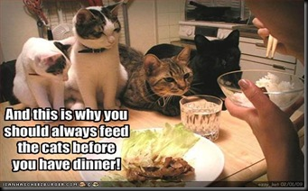 funny-pictures-you-should-feed-your-cat-before-dinner