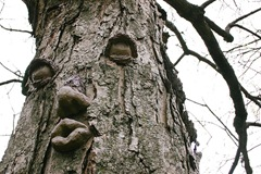 lips tree