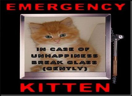 cats,kittens-049e6b35cf865e57cba8bcef3e6073b7_h