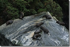Milford Sound 284