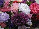 موسوعة رائعة من الورود 10