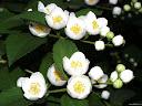 موسوعة رائعة من الورود 61