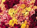 موسوعة رائعة من الورود 29