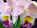 موسوعة رائعة من الورود 36