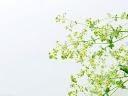 موسوعة رائعة من الورود Flowers-wallpaper%20%2840%29