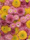 موسوعة رائعة من الورود Pattren%20%2814%29