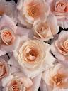 موسوعة رائعة من الورود Pattren%20%284%29
