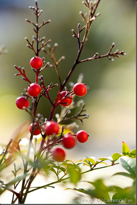 red-berries