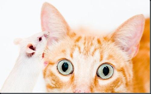 gato_raton_nop