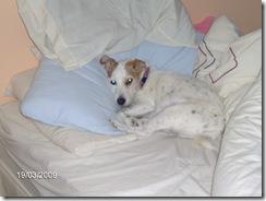 Barney in Bed