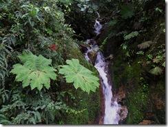 Leaf Waterfall
