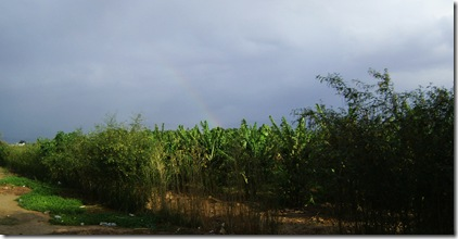 Bethany Rainbow