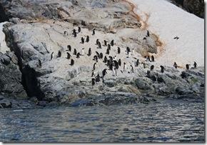Penguins Nicholas Bay