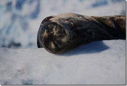 Leo Seal