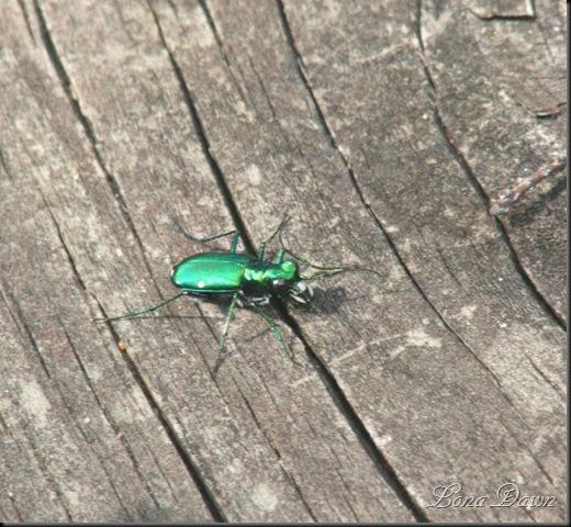 EmeraldBeetle2