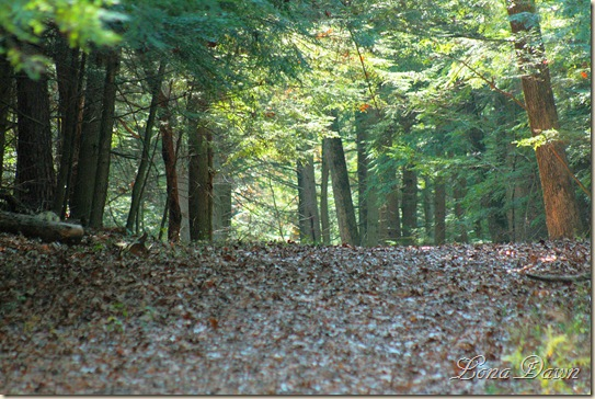 Fall_UpperTrail2
