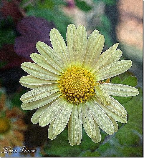 Frosty_Yellow2