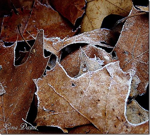 Frosty_Oaks2