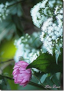 AnemoneSnakeroot_Bouquet