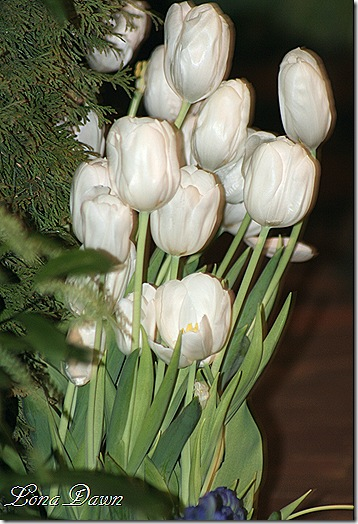CGS_WhiteTulips2