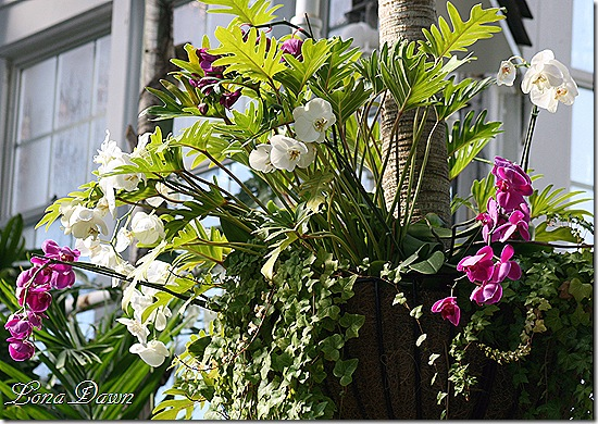 FPC_Tree_Orchids2
