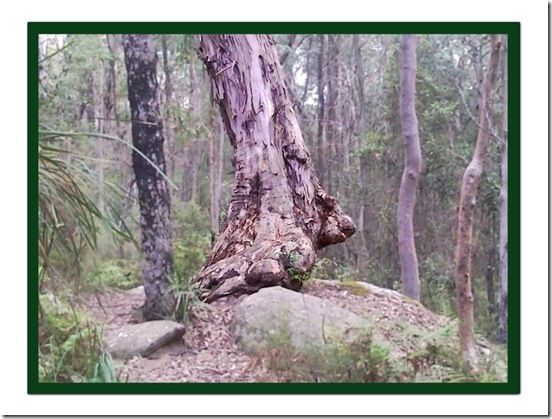 big foot tree on the move copy