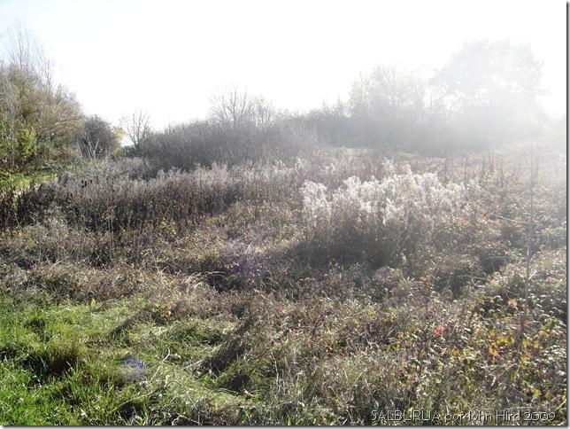Salburua Nov 2009 018