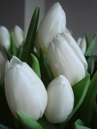 bloemen tot 2011 (52)