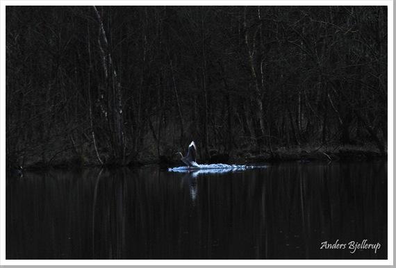 Fairy Tale Goose 20x30 ab dm