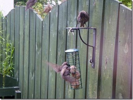Birdies June 2010