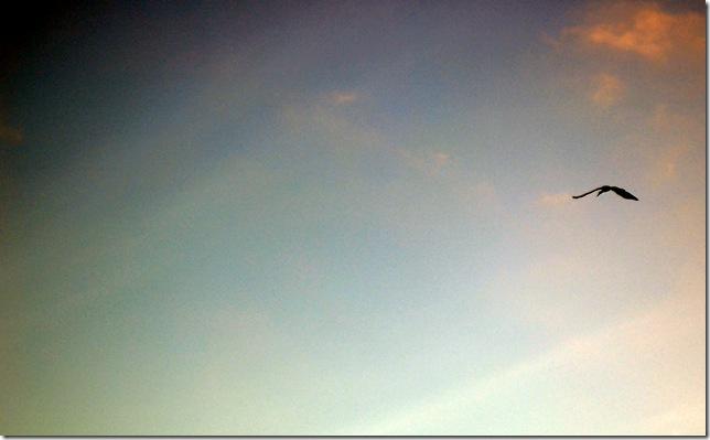 crested crane.hemel&aarde
