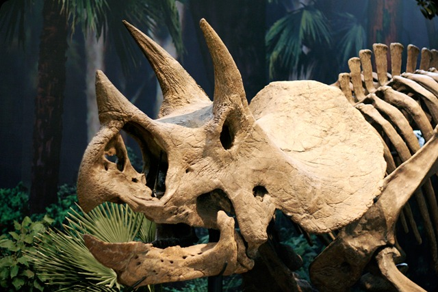 natural history museum 3 horn 