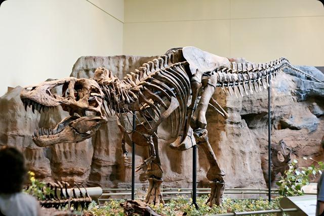natural history museum trexbody