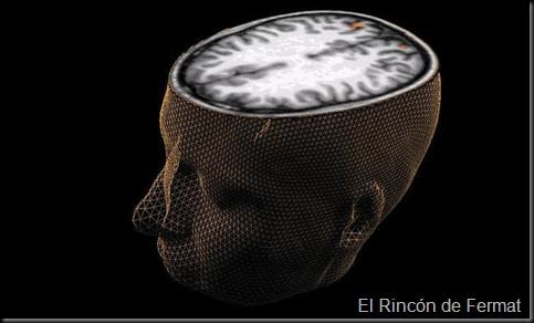 cerebro_humano--644x362