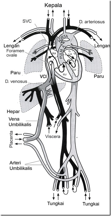 Sistem Kardio Vaskular