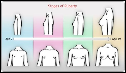 stages-puberty-female