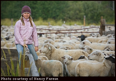 Girl and sheep