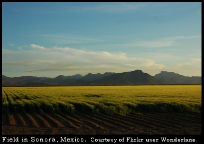 fields of Sonora