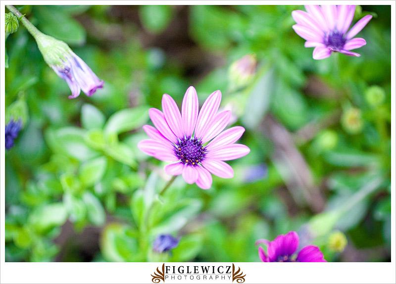 Botanic-Garden-Palos-Verde-Hayley-Bryan020.jpg