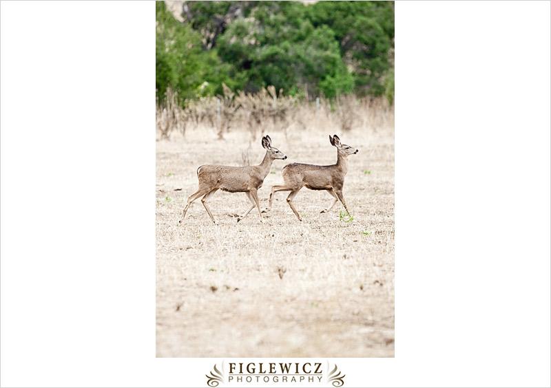 FiglewiczPhotography-Jalama-0001.jpg