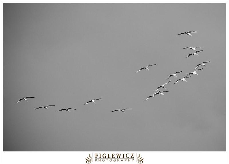 FiglewiczPhotography-Jalama-0006.jpg