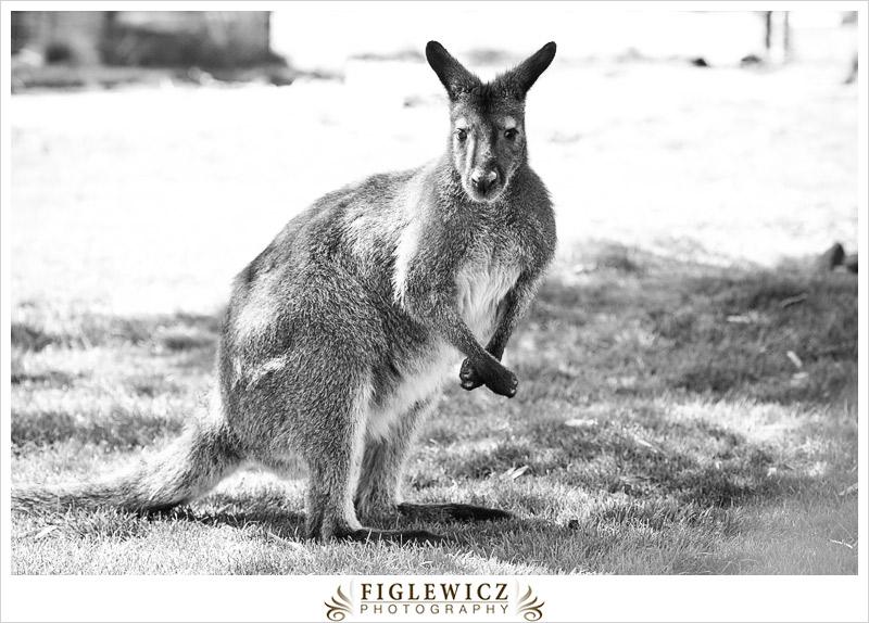 FiglewiczPhotography-AZ-0017.jpg